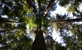 In Praise of Trees