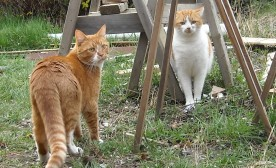 Norbert and O'Malley: A Tale of Two Drop-In Cats