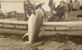 Wedgeport: Tuna Fishing Capital of the World – Then and Now
