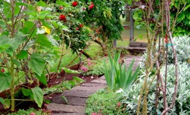 Confessions of a Mistake-Prone Gardener