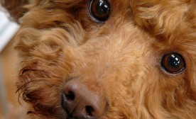 More Life Lessons from Dogs: The Love You Give
