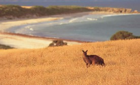 Get in Touch with the Wild Side: Adventures in Australian Paradise