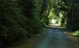 The Sacred Goose: On Victoria's Galloping Goose Trail