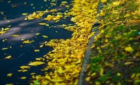 Welcoming Autumn