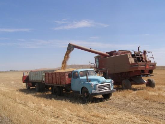 The Wheat Harvest