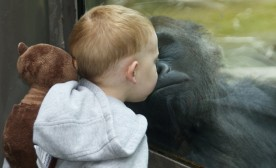 Stealing those gorilla kisses.