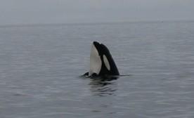 Random Love and X-Rated Orcas