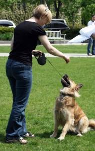Training a dog with treats