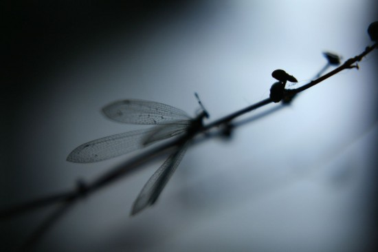 Time to fly - dragonfly on twig
