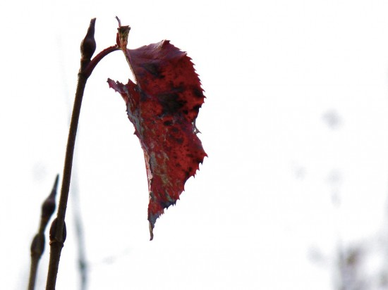 the last leaf conflict She is dying of pneumonia and because she does not believe that she will be  able to live once that last leaf falls so behrman goes and paints a leaf on the  wall  2 educator answers what are the conflicts in the last leaf by o henry.
