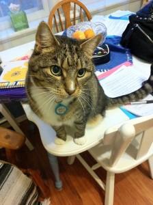 Eddie the three-legged cat