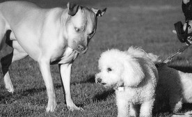 No Fighting, No Biting – Dogs Don't Always Get Along