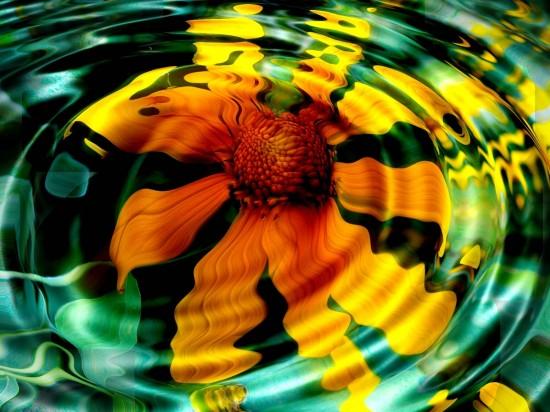 Flower underwater