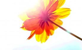 Flower and sunshine