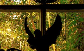 Angel in the window