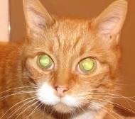 When is a Cat Not a Cat?