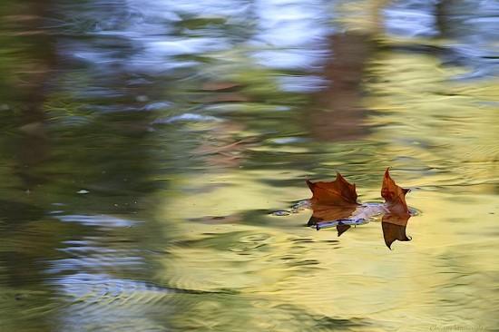 Leaf on River