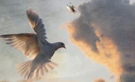 20 Ways to Peace