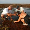 Scouring the ocean floor looking for edible seaweed