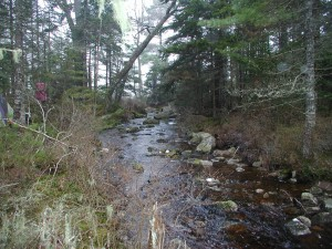 Headwaters of the Shelburne River.