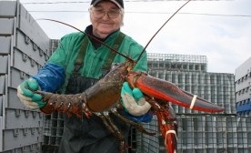 Yarmouth, Nova Scotia lobster