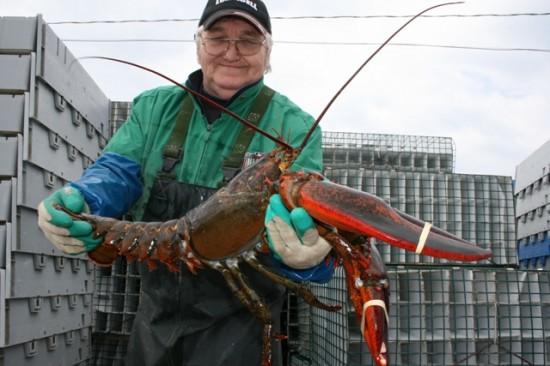 Yarmouth, Nova Scotia lobster