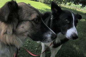 Nervous Dogs