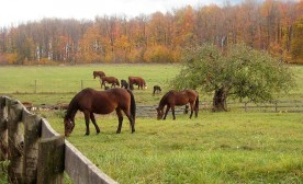 What it Takes to Be a Horse Owner
