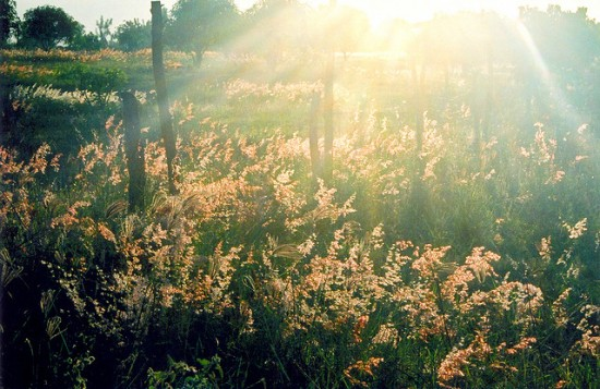 Field of flowers in sunlight