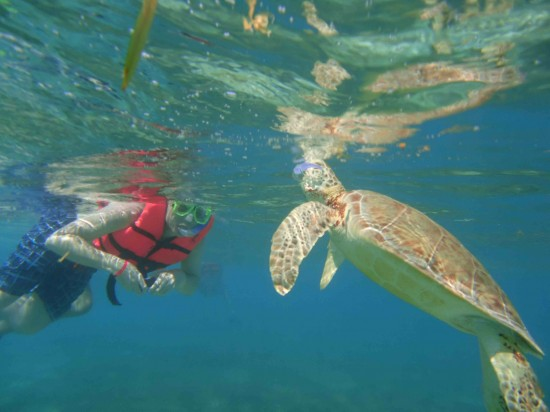 Swimming with sea turtles is one of the pleasures of visiting the Mayan Riviera