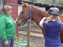 Horses are healers, as seen as Animals as Natural Therapy (ANT)
