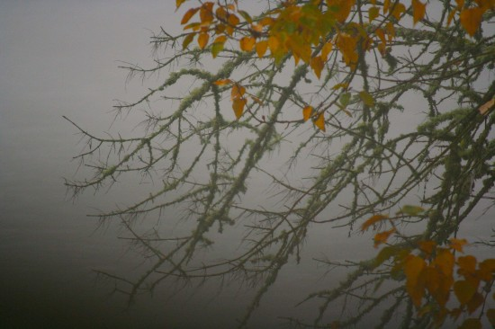 Leaves and moss in the fog © Michael Lebowitz