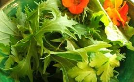Salad with nasturtiums