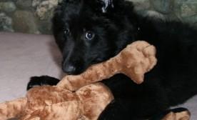 Baby Rizzo