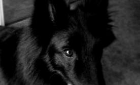 A Broken Dog – Part 1 (Breaking Down)