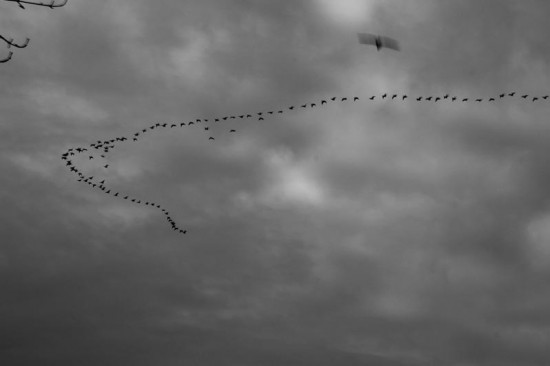 long run birds