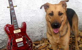 Training Your Dog and All That Jazz