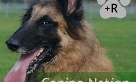 2011 – A Year For The Dogs and The Canine Nation