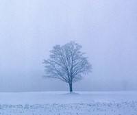 Loneliness During the Dark Days of Winter