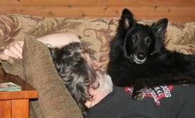 """My """"Dominant"""" Dog and How I Cope"""