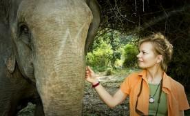 Life As An Elephant