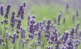 Minute to Freedom #73: The Color Purple