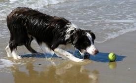 Dog Training and Distracting Rewards