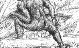 Discovering Sasquatch…the Truth is Out There