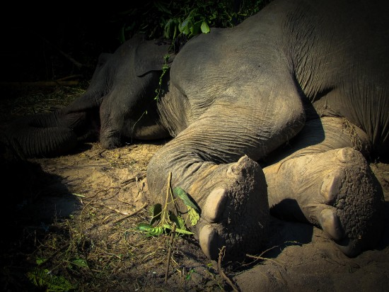 Elephant RIP
