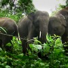 What Can We Do for Elephants - UPDATE