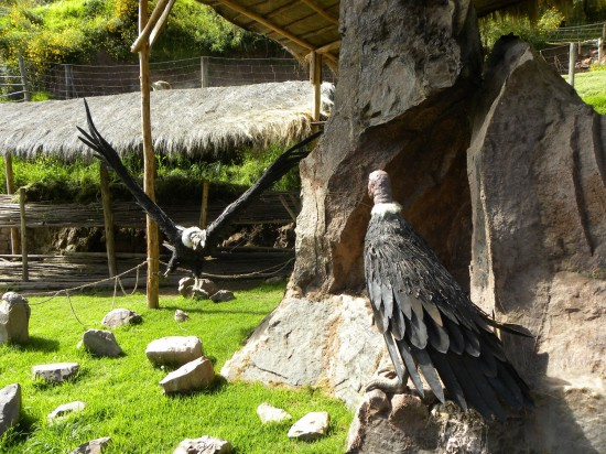 Giant Andean condors (models)