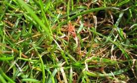 Red Thread In The Lawn: Get Rid of That Problem Forever