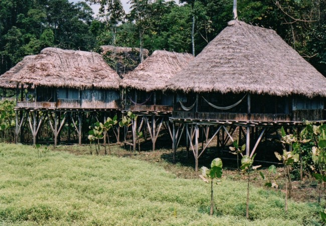 A couple of the cabins at Kapawi Ecolodge. Our cabin is the one in the forefront.