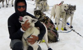 Mushing Dogs On Alaska's Norris Glacier